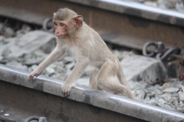 Monkey city