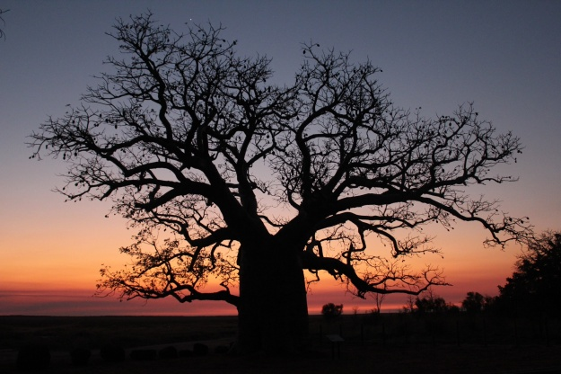 The Dinner Tree