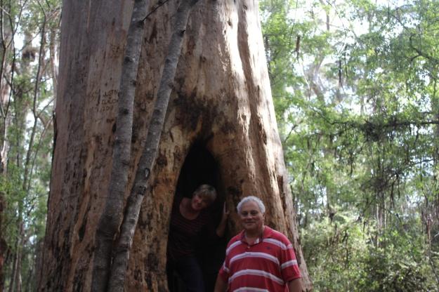 Karri Forest - near Beedalup Falls