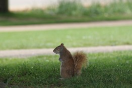 Having lunch in Hyde Park with the squirrels