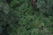 My favourite a sea of tree ferns