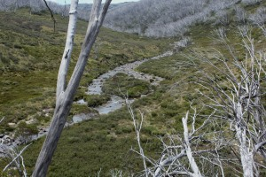 A lovely valley to walk down into with views of the Geehi River tumbling over its rockey journey from Jajungal to the Murray River.