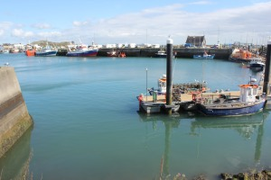 The harbour of Howth and we see two seals playing about in the calm waters