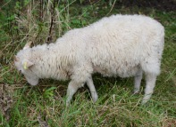 Rare breeds of all kinds are being bred here and you can even eat them - if you are that way inclined.