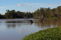 The Balonne River, St George